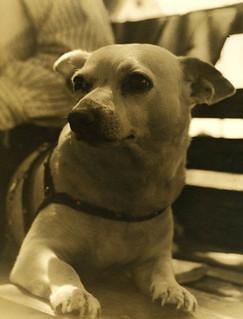 Close-up view of dog: Riviera Beach, Florida