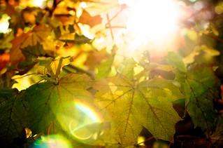 Autumn | by bark