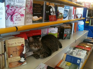 bookstore cat | by xdxd_vs_xdxd