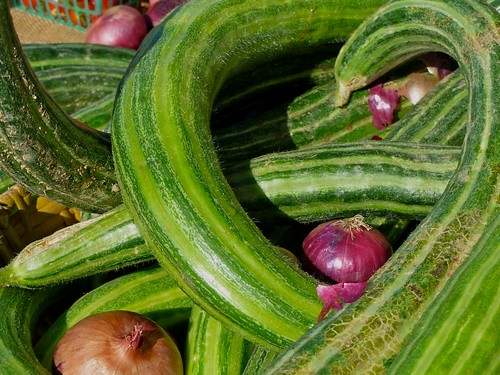 """Armenian cucumber also known as  """"snake cucumber"""" or """"snake melon"""" 