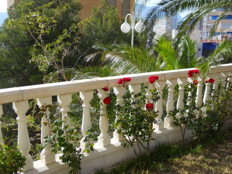 Rosales y palmeras