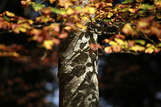 autumnal | by jenny downing