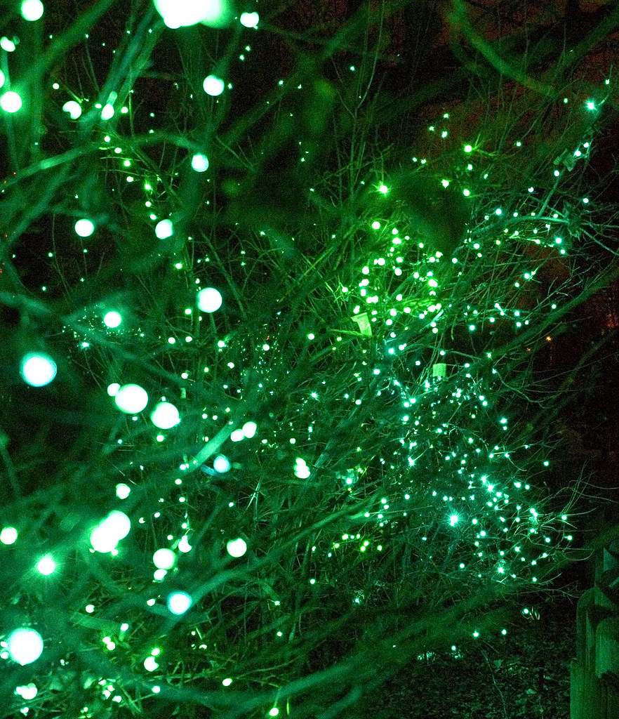 Green Christmas Lights At The Denver Zoo