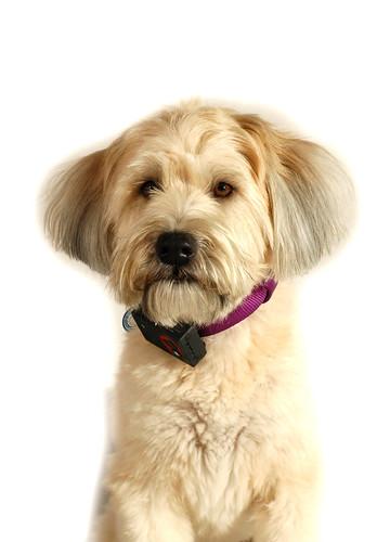 GPS Canine Tracking