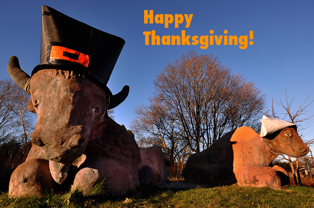 Bison Are Ready For Thanksgiving >> The Bison Are Ready For Thanksgiving Bison Prairie Gateway Flickr