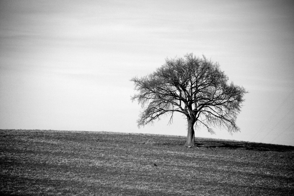 Lonely Tree—Black and White