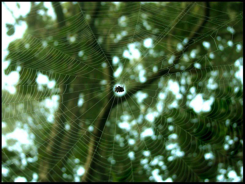Scimparagno: Thro My Trek Into Kerala Forests Of Thekkady