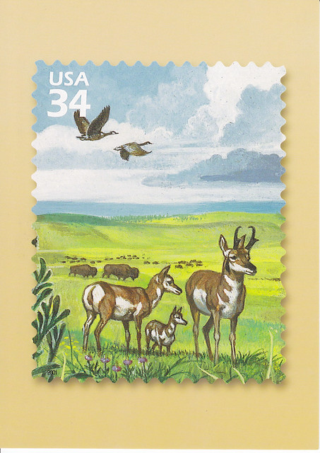 USPS Great Plains Prairie Pronghorn Postcard