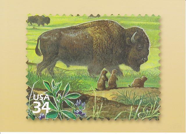 USPS Great Plains Prairie Bison Postcard
