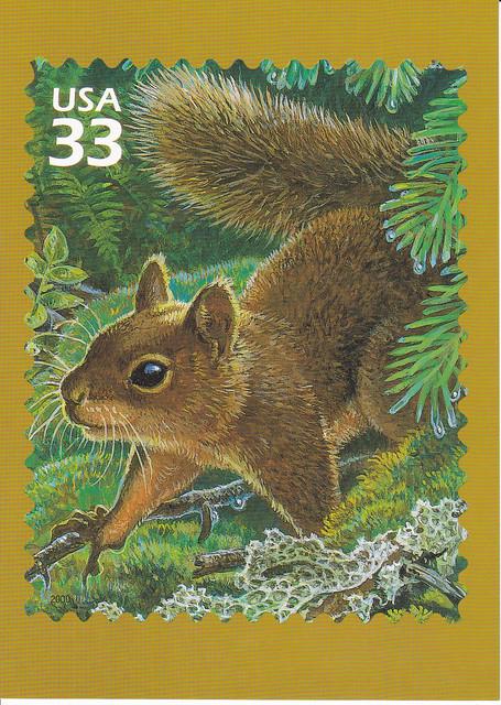 USPS Pacific Coast Rain Forest Douglas' Squirrel Postcard