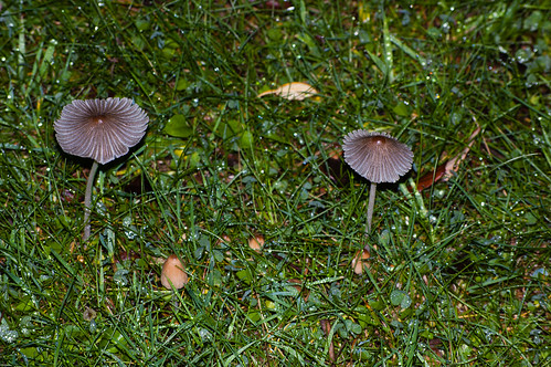 Delicate mushrooms