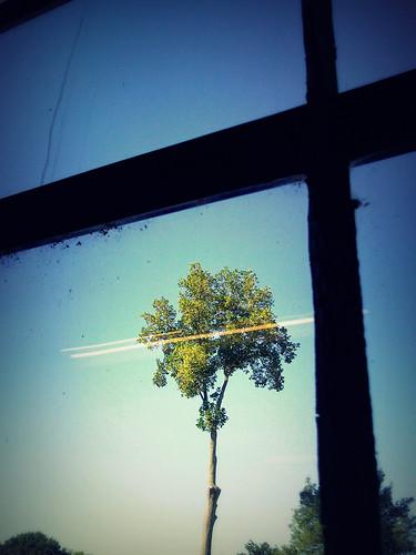 sky tree window glass studio phonepic view lowemill flyingmonkey