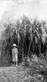 Young girl standing in front of a crop of napier grass: Okeechobee, Florida