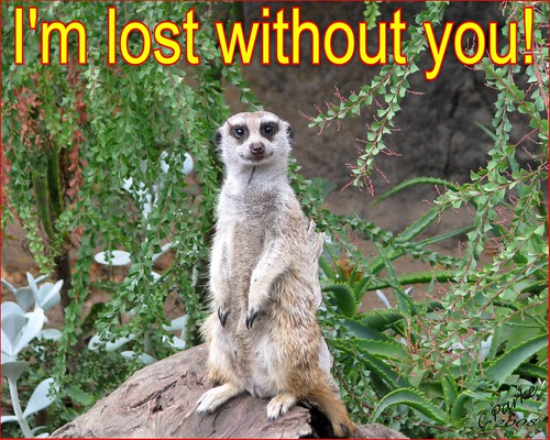 eCard: Missing You - meerkat: I'm lost without you | by you get the picture