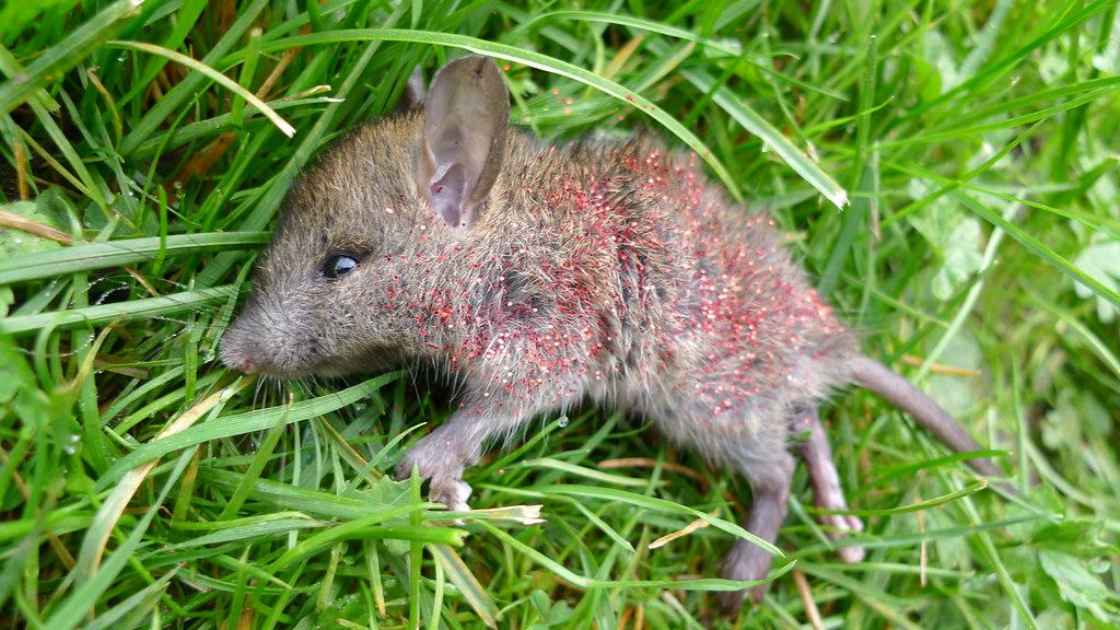 Glitter mouse | Found a dead mouse in the yard, threw a ...