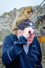 Monkey on Your Back