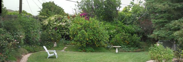 100629 backyard citrus trees buddha etc ICE rm sd790 6692_707compr9
