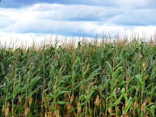 ontario canada field corn head farm bond l0g