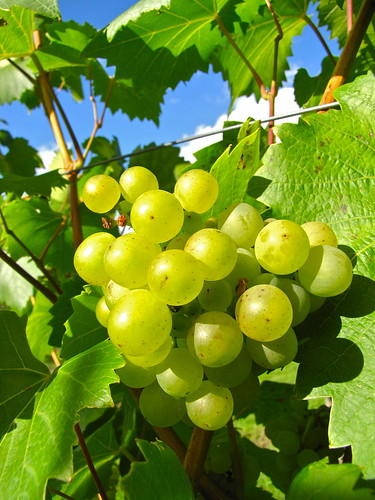 grapes | by London looks