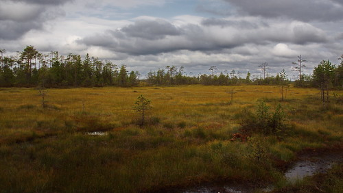 Perfect Bog | by ressaure