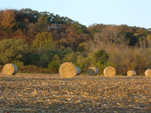 sunrise corn feed bale