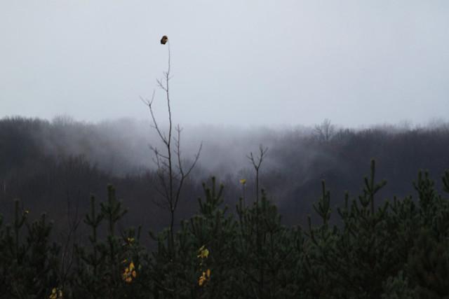 Mist on Rib Mountain