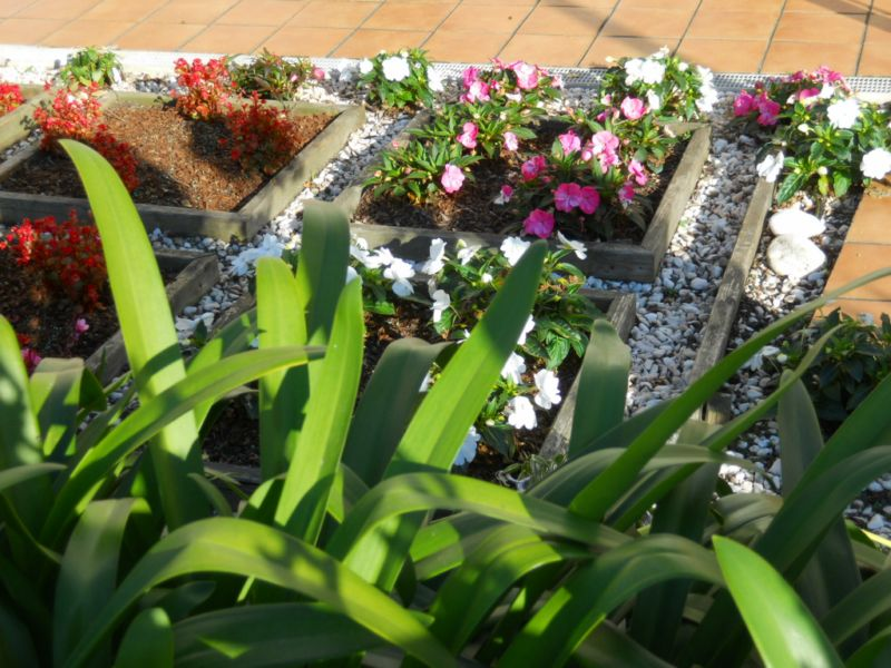Decorado con plantas