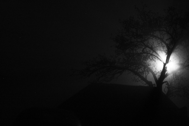 imgp1974 - Fog