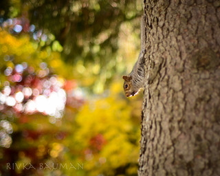 Squirreling | by BeccaBauman