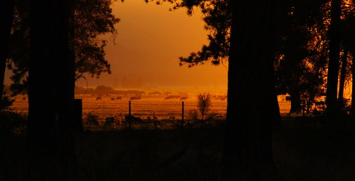 trees sunset usa silhouette oregon fence golden cow cattle cows fv10 framing lowkey ponderosa goldenhour lightfantastic hff fencefridays