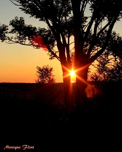 sunrise sun trees nature landscape orange bright massachusetts yellow