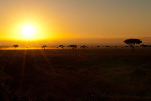 africa sunrise kenya safari event afrika region soluppgång masaimaranationalreserve riftvalleyprovince maasaimaranationalreserve oloolologatecamping