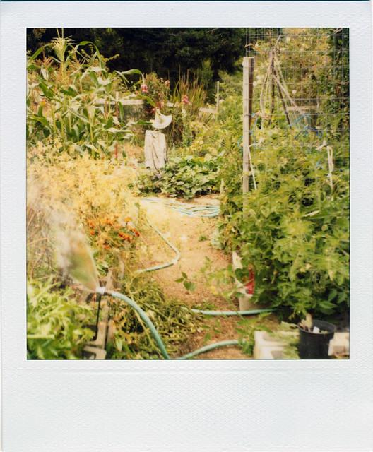 leon's garden, summer's end