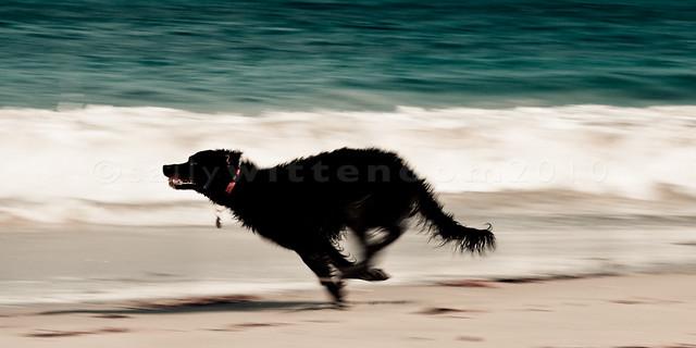 Maisy running full tilt