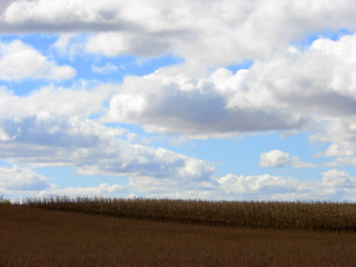 Clouds over Soybean and Corn fields | by GoddessOfRocks