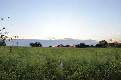 flowers sunset field texas dusk pollen seguin beekeeping apiary beeyard bigoaks