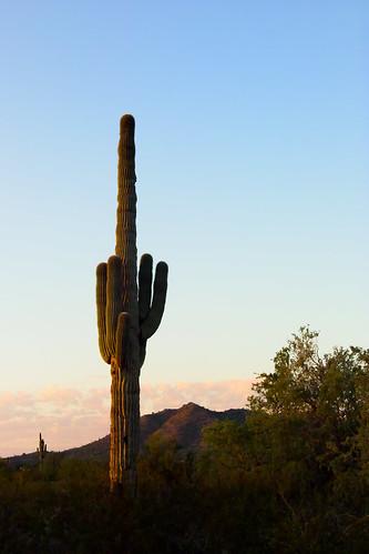 arizona cactus sunrise unitedstatesofamerica saguaro pinalcounty santanvalley