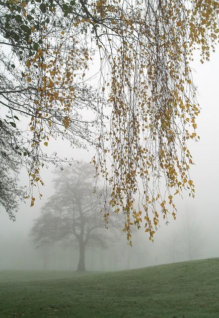 Misty November