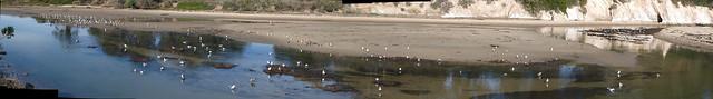 JB141034_13 101114 Goleta beach slough gull flock ice rm stitch compr11