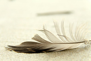 Windblown Feather | by lotus8