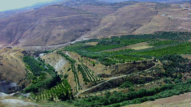 JORDANIEN - Landschaft vor Amman
