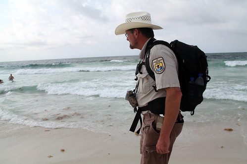 Search and capture on Pensacola Beach during oil spill response   by USFWS/Southeast