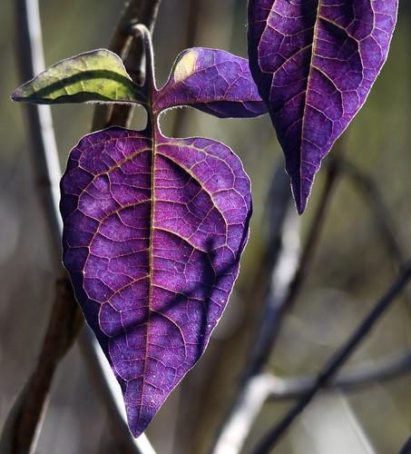 More Fall Colors   by Dawn Huczek