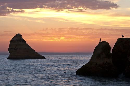 ocean sea beach portugal sunrise dawn gulls lagos algarve sigma70300mmf456apodgmacro canoneos7d
