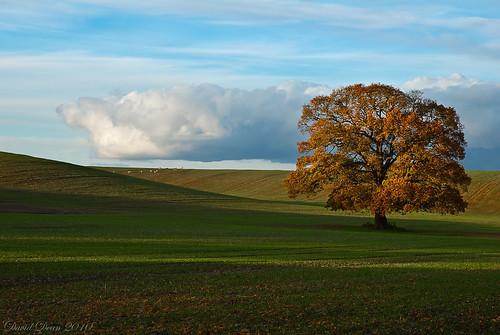 "autumn light tree fall rural landscape gold golden countryside oak nikon farmland arrow nikkor 1001nights warwickshire vr gmt d60 alcester warks mywinners platinumheartaward 1685mm ""flickraward"" 1001nightsmagiccity jactoll"
