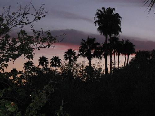 trees americanwest sunsetsunrise acvp