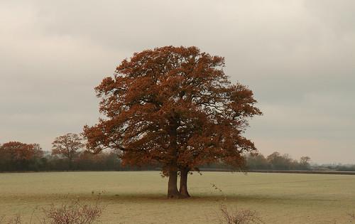 Otmoor tree   by Danny Chapman