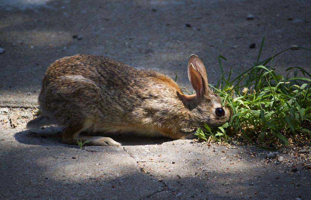 bunny forage