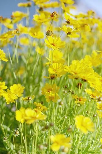 summer petals yellowflowers