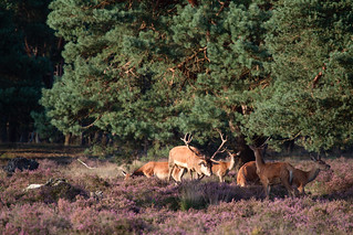 Nationaal Park De Hoge Veluwe | by F.d.W.